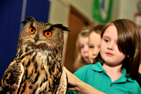 2011-02-07 Owls at Glenbervie School