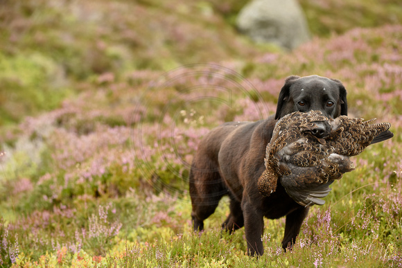 20150812- Gift of Grouse Campaign 010