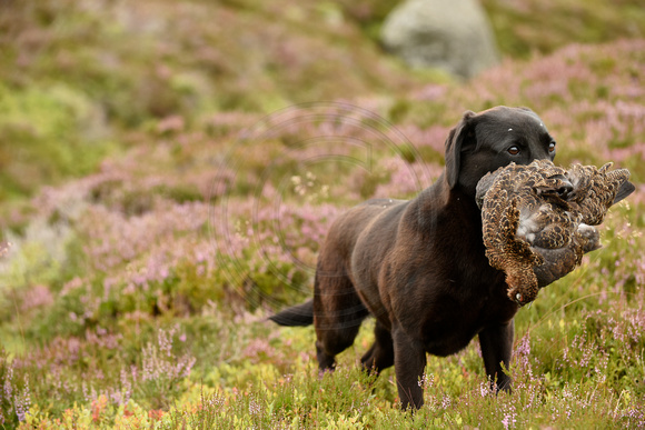 20150812- Gift of Grouse Campaign 011