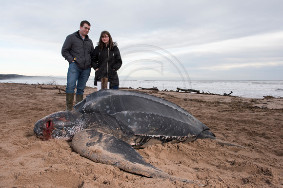 20160108- Leatherback Turtle at St Cyrus 001